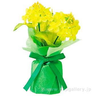 菜の花ラッピングポット