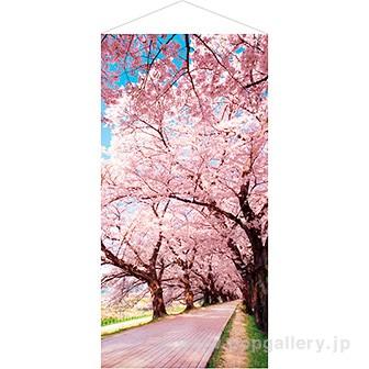 桜並木タペストリー(防炎加工)