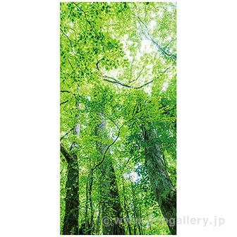 木漏れ日若葉タペストリー(防炎加工)