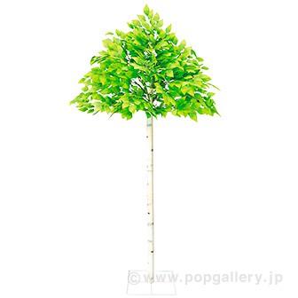 若葉白樺立木