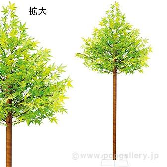 楓立木 (高さ:230cm)