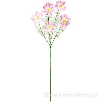 コスモススプレー5輪(ピンク)