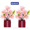 桜BOXポット(2ヶ1セット)