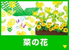 菜の花の装飾品を見る