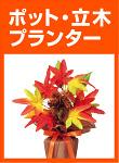 紅葉のポット・プランター立木(リス・赤トンボ)を見る