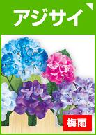アジサイ(紫陽花)の装飾品を見る
