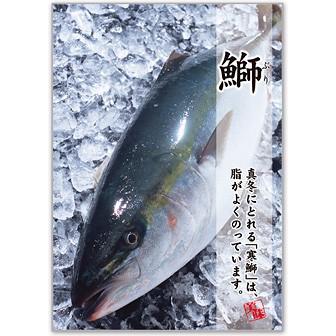 A3ポスター 鰤(ぶり)