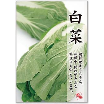 A3ポスター 白菜