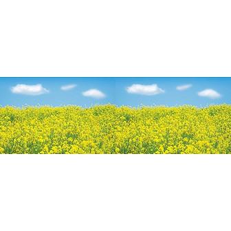 ビニール幕 菜の花(写真)
