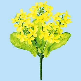 ニュー菜の花ブッシュ