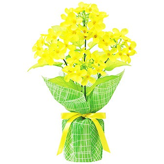 菜の花バリューラッピングポット
