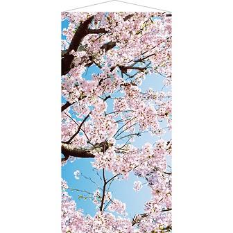 青空桜タペストリー(防炎加工)