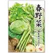 A3ポスター 春野菜