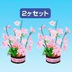 漆桜ポット(2ヶセット)