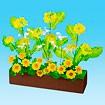 菜の花アレンジプランター