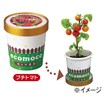 カップ農園ECOMOCO(プチトマト)